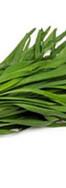 4-garlic-chives.jpg