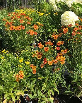 1-perennials2_edited.jpg