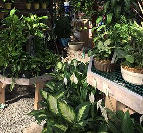 Samll House Plants_edited.jpg
