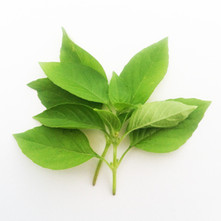 Basil-Lemon.jpg