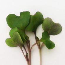 Cabbage-Purple.jpg