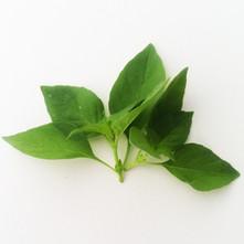 Basil-Lime.jpg