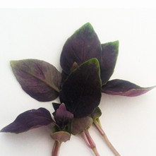 Basil-purple.jpg