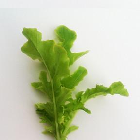 Lettuce-GreenSaladBowl.jpg