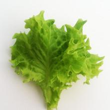 Lettuce-GreenLoloRosa.jpg