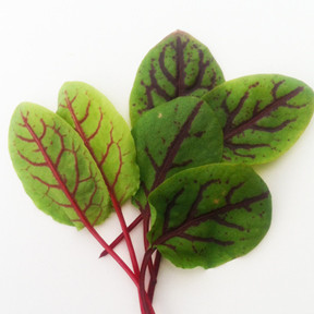 Sorrel Red Veined.jpg