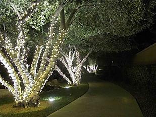 Tree lights.jpg