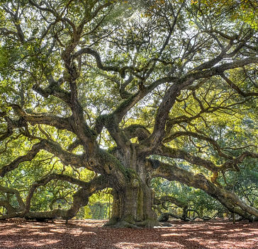 Giant mother tree