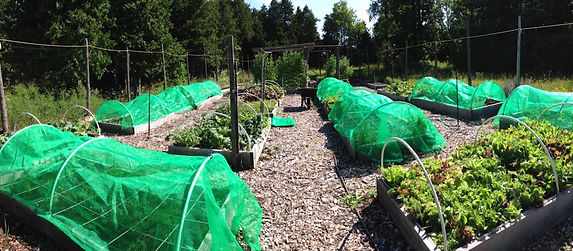 Vis Tree Farm - Raised Beds