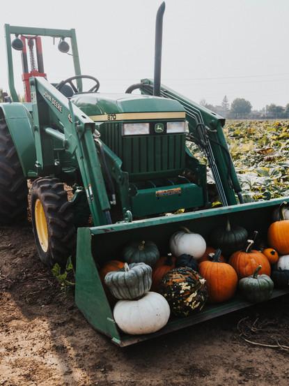 GS Pumpkin Patch 2020 FINAL_-46.jpg