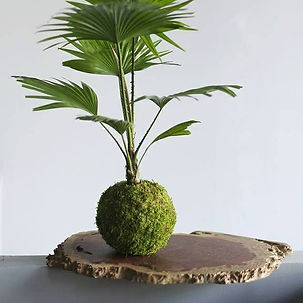 Kokedama -Art Floral Japonais