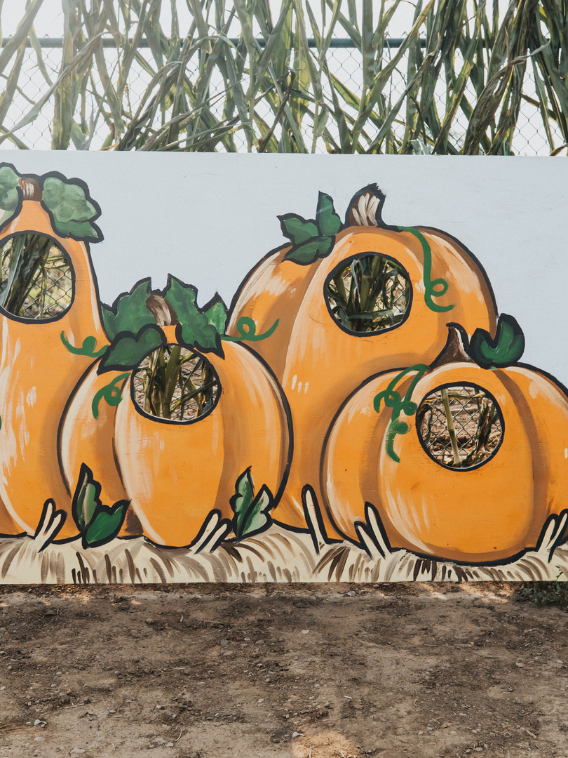 GS Pumpkin Patch 2020 FINAL_-87.jpg
