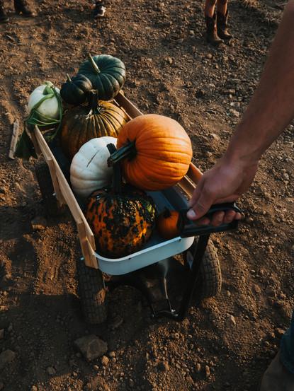 GS Pumpkin Patch 2020 FINAL_-179.jpg