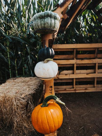 GS Pumpkin Patch 2020 FINAL_-15.jpg