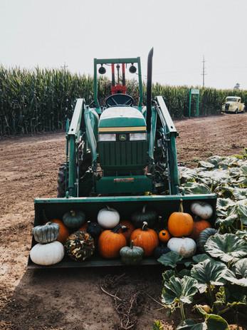 GS Pumpkin Patch 2020 FINAL_-5.jpg