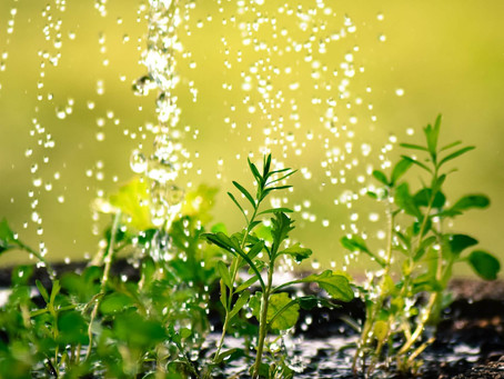 Make the most of rainwater
