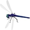 Dragonfly, Pixabay