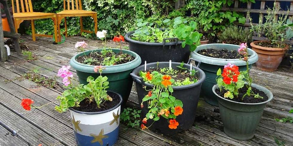 Community Gardening Social @ Morden Baptist Church