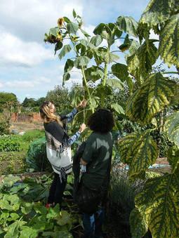 Sunflower Michelle (1).jpg