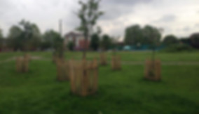 Octavia's Orchard