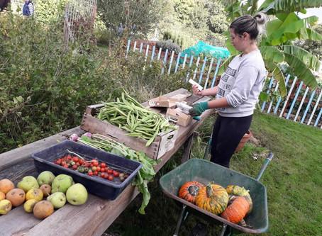 Community Harvest: Phipps Bridge Community Garden