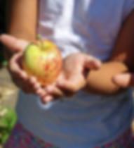 Apples (1).jpg