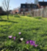 Mitcham Orchard 23rd Feb 2019
