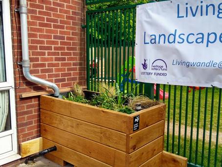 Creating a rain garden