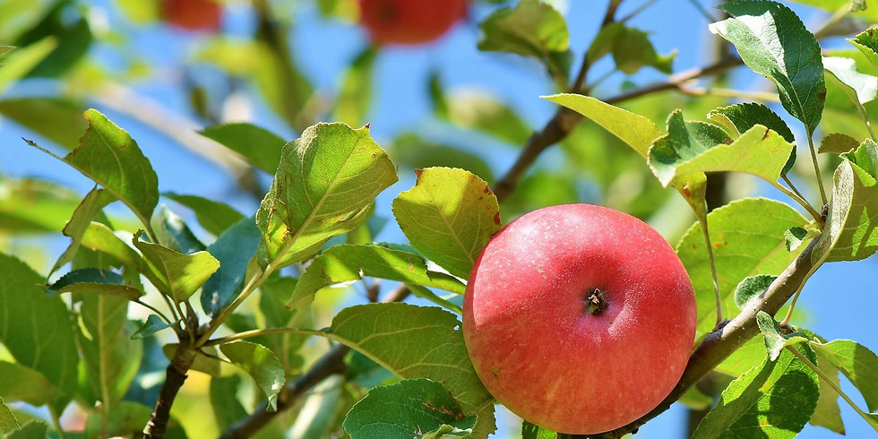 Saving, sharing and making the most of surplus fruit