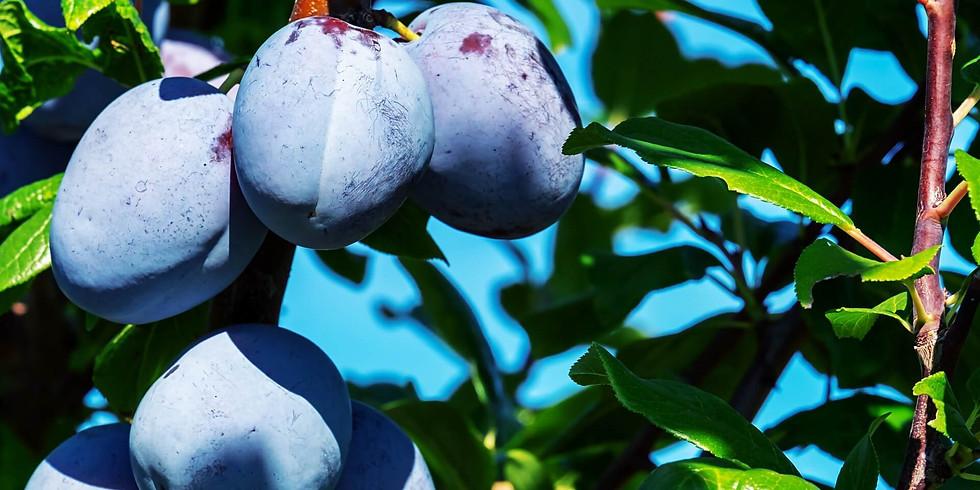 Soft Fruit Pruning Workshop