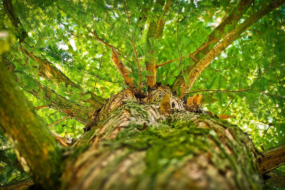 tree-1750784_1920.jpg