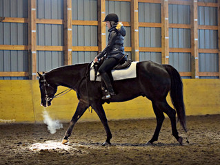 Western Dressage - Free Walk and Jog