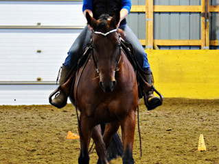 Western Dressage - How to properly execute a leg-yield