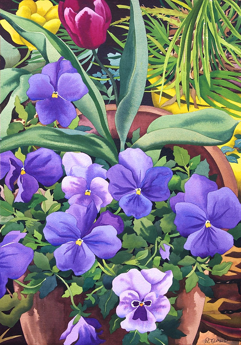 Flowerpots with Blue Pansies