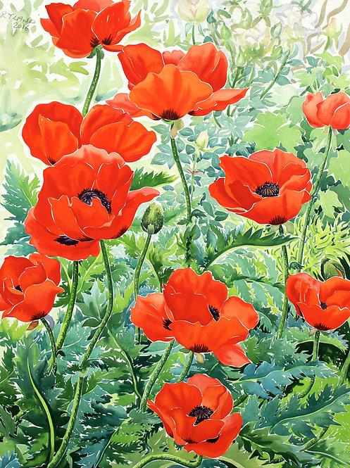 Garden Red Poppies