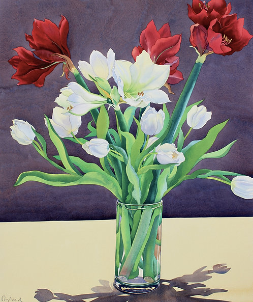 Amaryllis and White Tulips