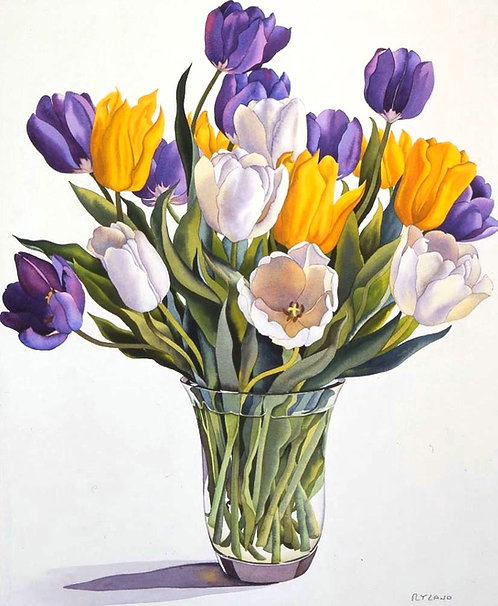 Yellow, White and Purple Tulips