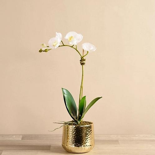 Parisian Orchid Gold Vase