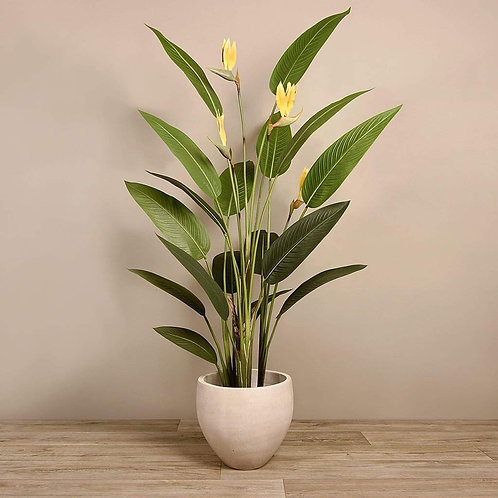 Strelitzia Palm - Large