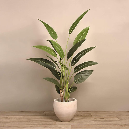 Strelitzia Palm - Large