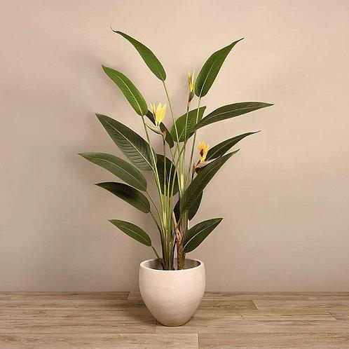 Strelitzia Flower -Medium