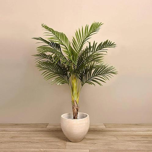 Areca Tree - Small
