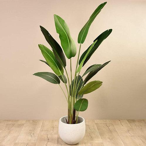 Strelitzia Palm II - Large