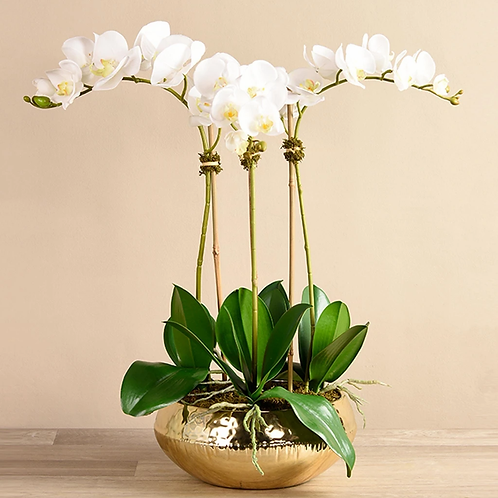Chic Gold Orchid