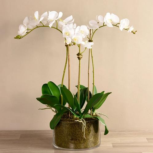 Orchid Arrangement in Glass Vase