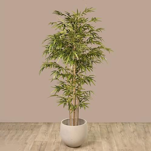 Bamboo Tree - Medium