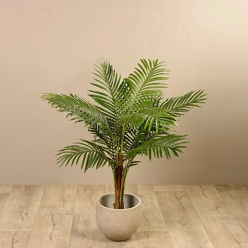 Paradize Palm - Small