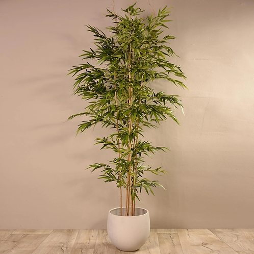 Bamboo Tree - Large