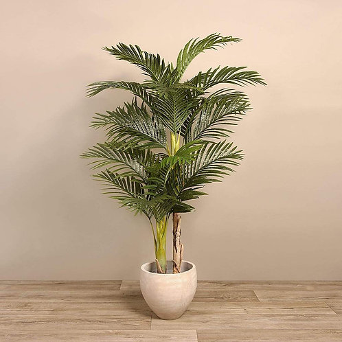 Areca Tree - Medium