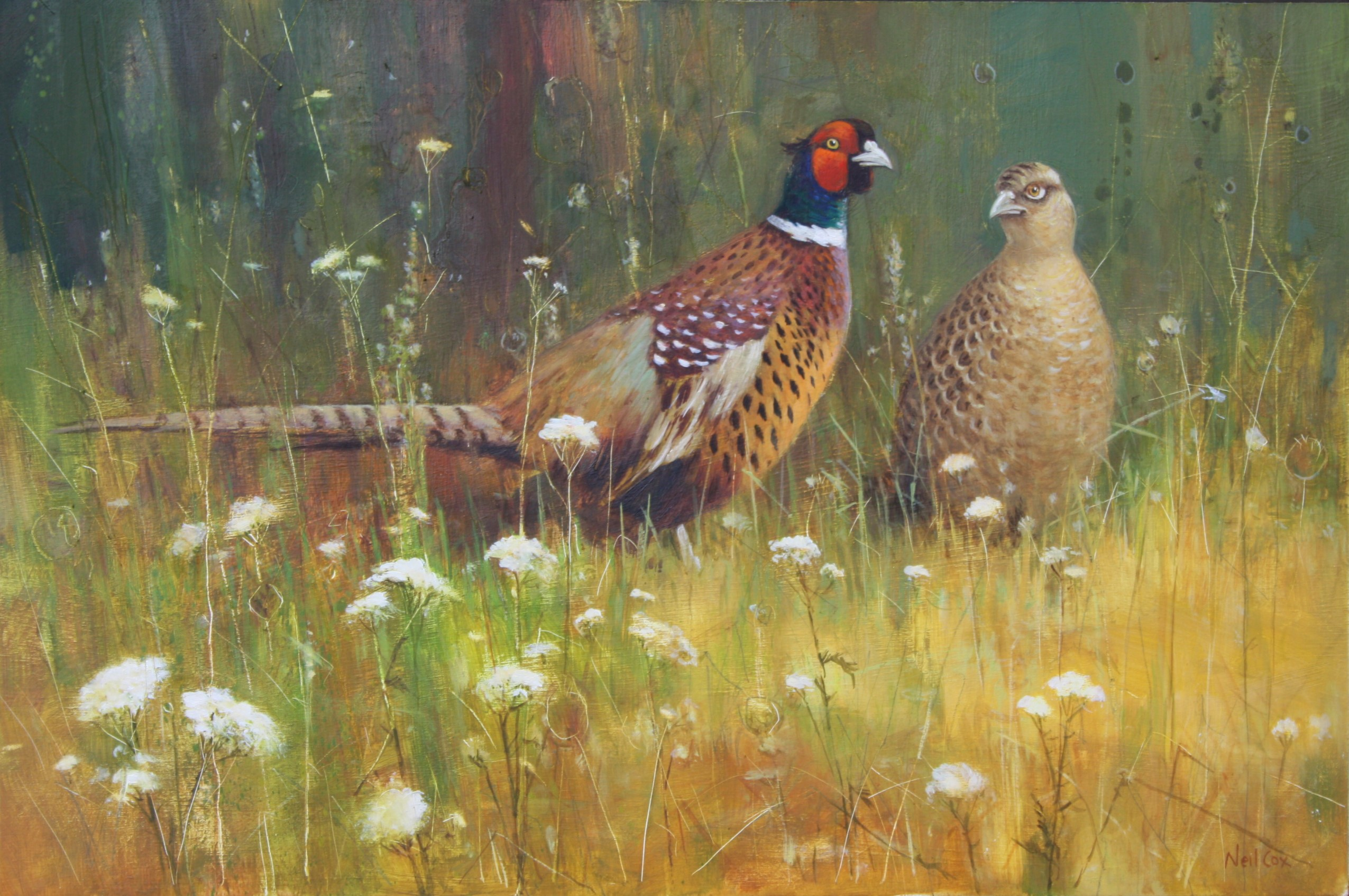 Summer Meadow, Pheasant